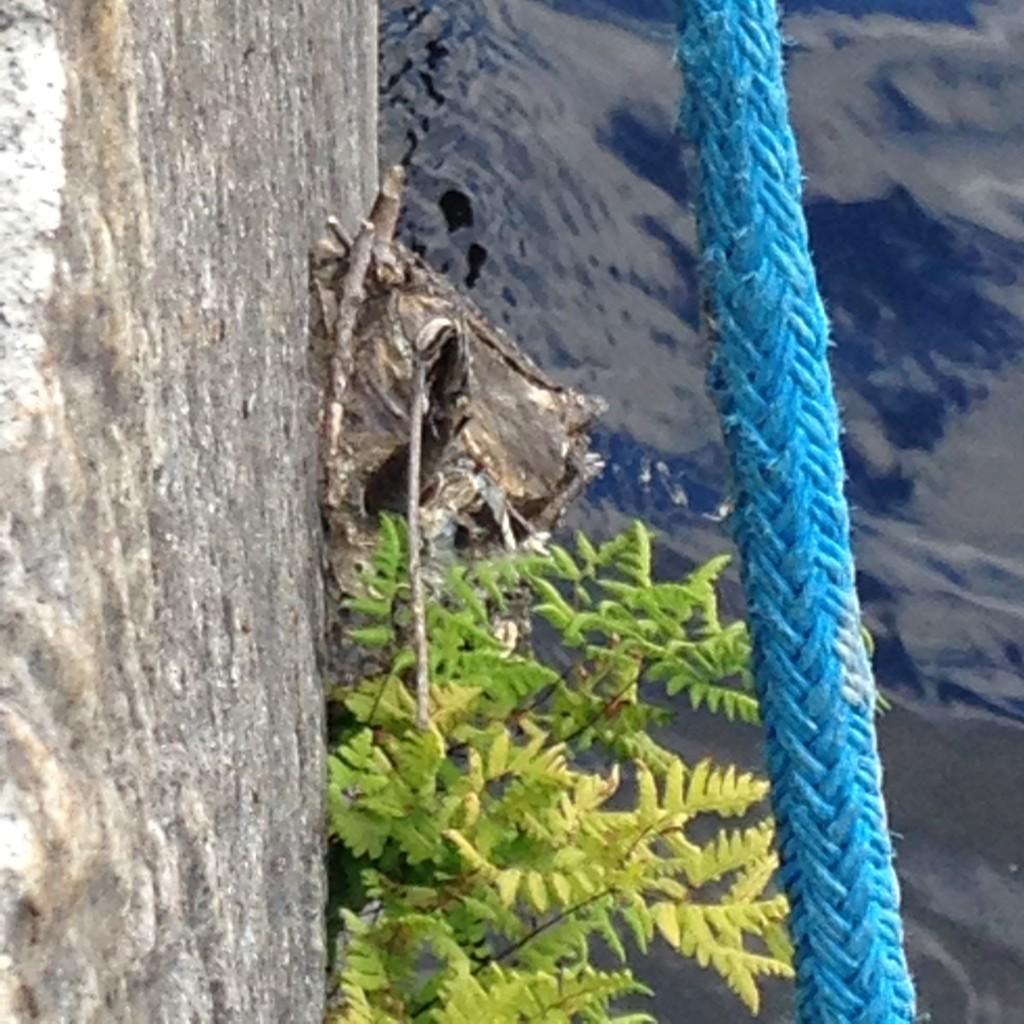 Watch your step! It's a stump sticking out from the wall of the harbor basin. Would've been fun to see that tree... (Ole varovainen! Kanto tököttää satama-altaan muurista. Olisipa ollut hauska nähdä se puu...)